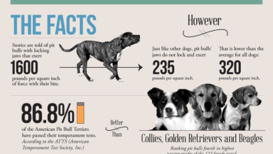 Photo of The Truth about Pit Bulls [Infographic]