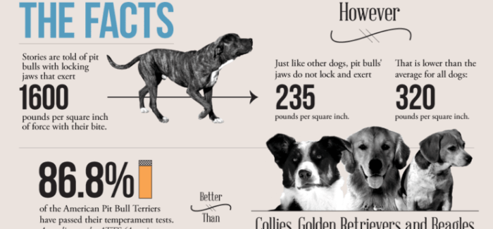 The Truth about Pit Bulls [Infographic]