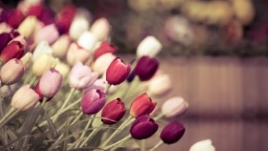 Photo of Choosing the Right Flowers for the Right Occasion – 5 Quick Tips