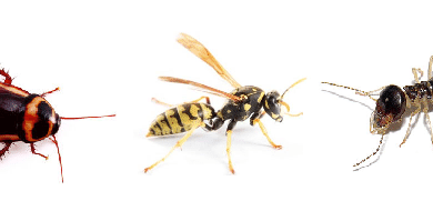 Photo of 5 Top Qualities to Look for in a Pest Control Company: So they don't become a pest themselves!