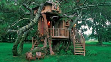 Photo of The Joys of Building a Backyard Treehouse