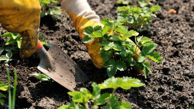 Photo of Making Time for your Garden