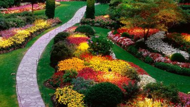 Photo of Commercial Landscaping: How It Can Help Your Business Grow