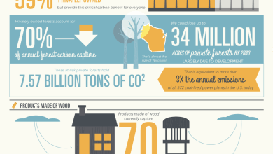 Photo of Putting Forests To Work [Infographic]