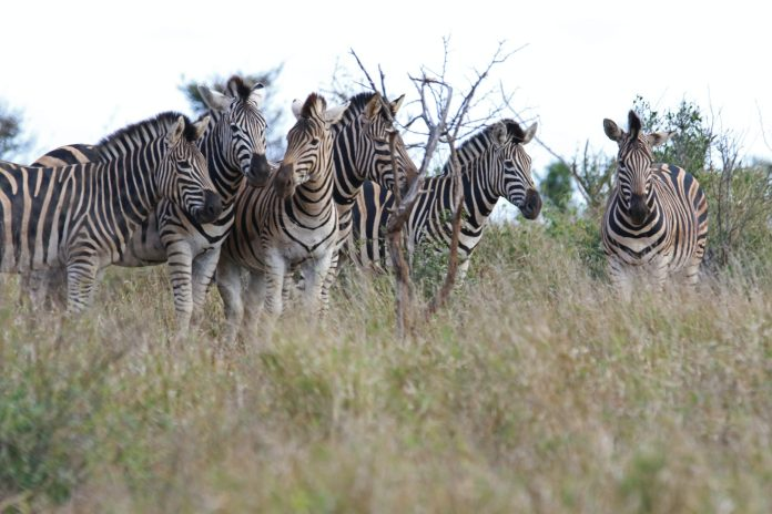 Tried-And-Tested Tips For Planning A Wildlife Adventure Abroad 1