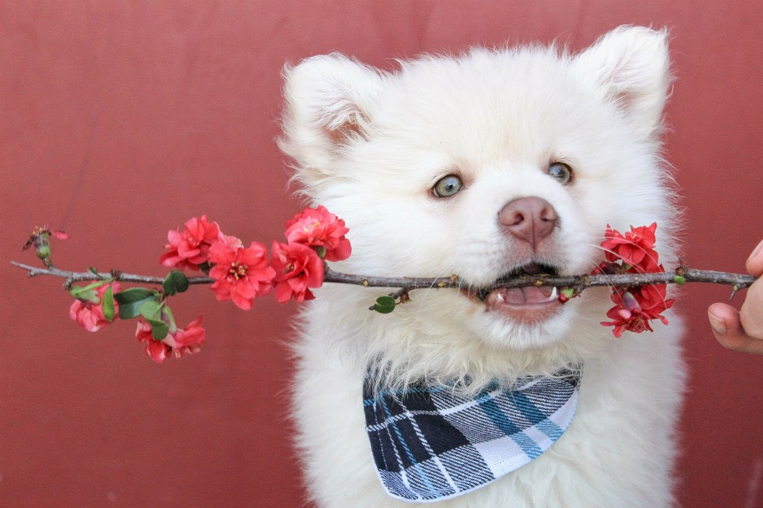 Best Dog Collar Styles In 2021 4