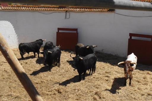 Orden de lidia de los toros de Torrestrella para hoy en Huelva