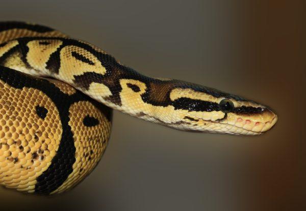 Змея заползла