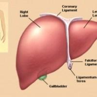 Terapi Jus Untuk Mengobati Penyakit Liver