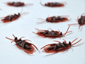 Pest Control Tips for New Home Buyers