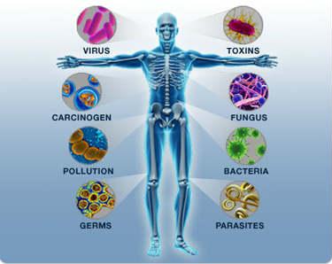 O Sistema Imunitário: Como funciona