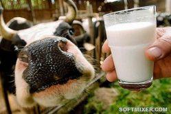 Молоко: из чего оно сейчас состоит. Что мы с вами пьем. Вся правда о молоке