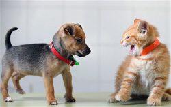 Почему собаки не любят кошек. Все дело в инстинктах
