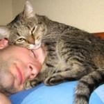 Кошка признается человеку в любви. Признаки