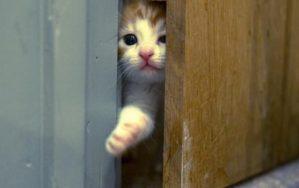 Почему кошка ждет у двери хозяев