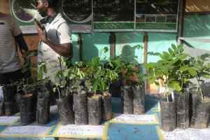 Environnement : l'arbre célébré au Burkina