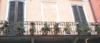 terrazza decorata con piccoli abeti