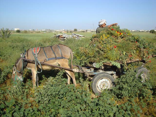 farmers-in-the-region
