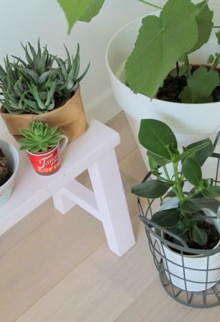 ingebruins-planten