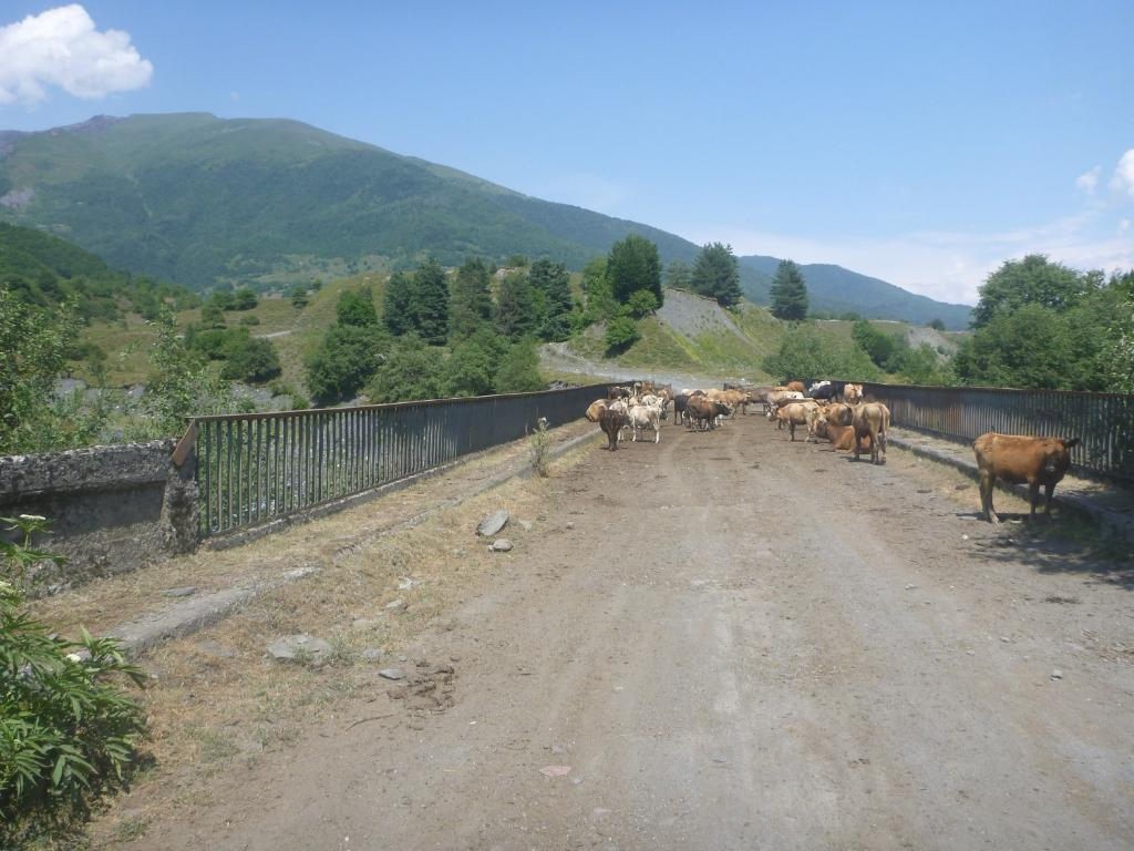 cow bridge
