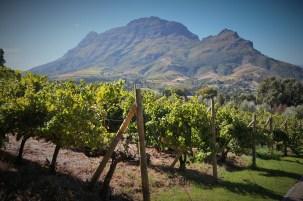 Sleeping Man and vineyards at Clouds Estate