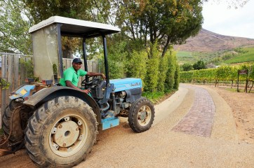 Vineyard worker at Delaire Graff