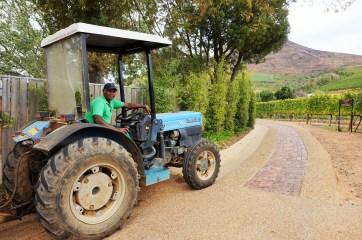 Vineyard worker at Delaire Graff