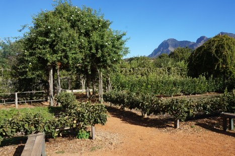 Gardens at Babylonstoren