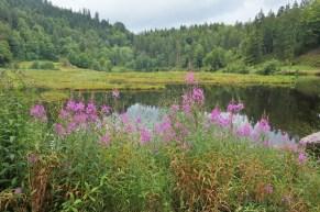 Nonnenmattweihen, a small lake in Kleines Wiesentals region of the Black Forest