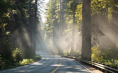 Redwoodsklein_DX_7774