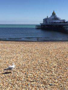 martı çakıl Eastbourne kumsal