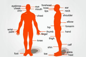 Ingles Foco - Dicas gratis - Parts of the body