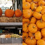 Fall Flavors – Sabores de Outono