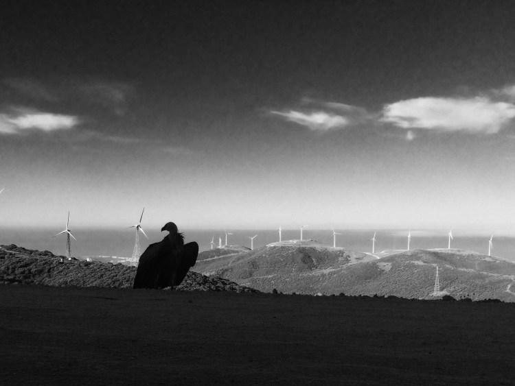 contemplation (c) Niki Williamson