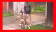 How to stop your dog from pulling on the leash FREE Video
