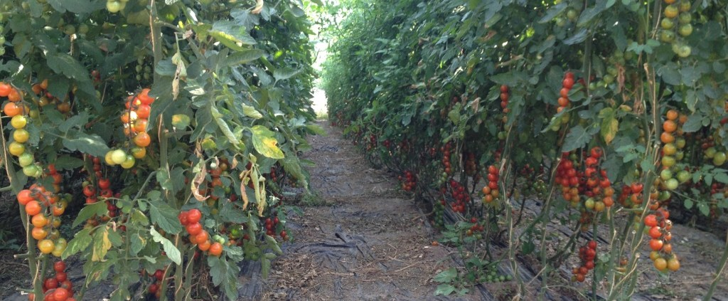 Cultivo Ecologico en Alhama de Granada