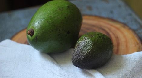Frutas de Março | Abacate x Avocado