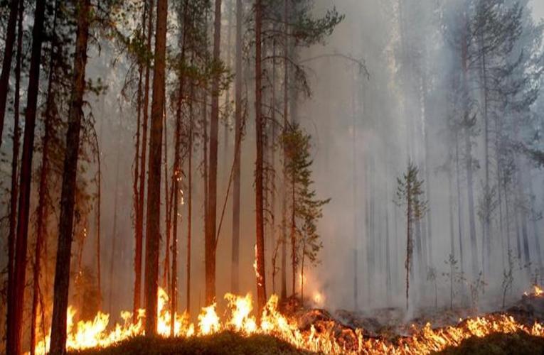 Gli incendi boschivi del circolo polare artico: la calda estate del 2018