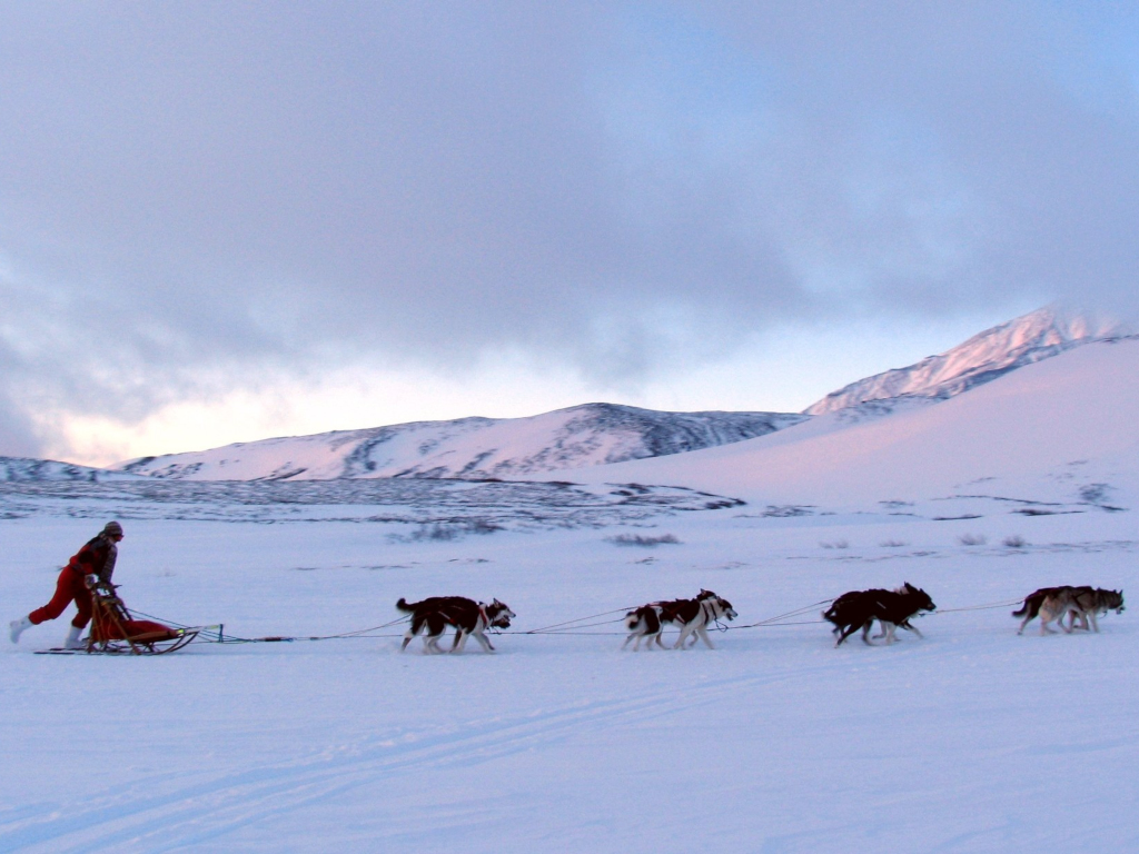 Taro e Jiro: una storia antartica