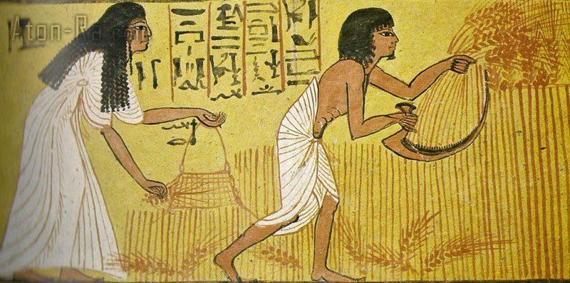 egiziani e agricoltura