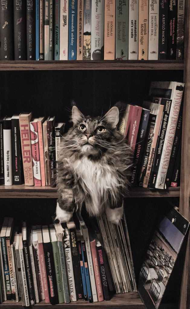 Cats Run This Library is a collection of essays for pagans from outsider author Ing Venning.