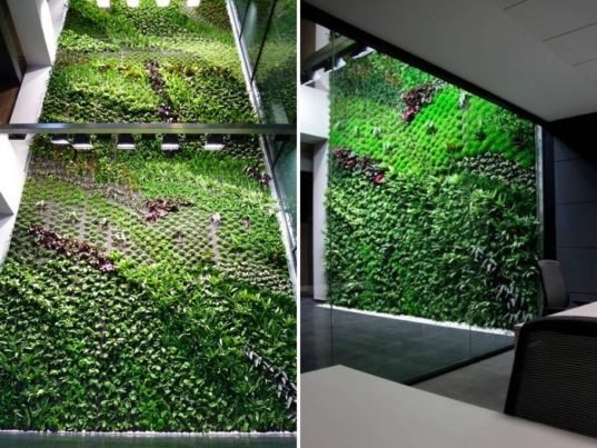largest vertical garden Spain's Largest Vertical Garden Cleans Indoor Office Air