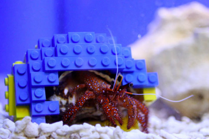 Harry The Hermit Crab Gets A Lego Home Of His Own
