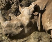 6 critically endangered animals threatened with extinction because of