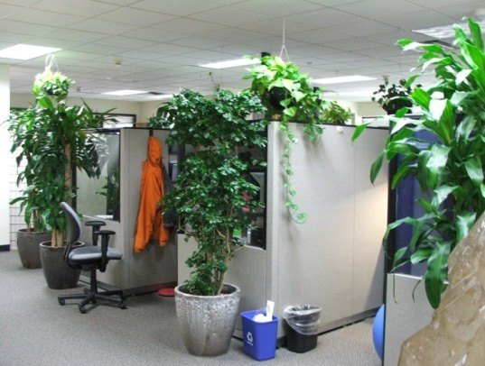 9 low maintenance plants for the office   Inhabitat   Green Design     plants  office  garden  green  clean air  indoor  gardening
