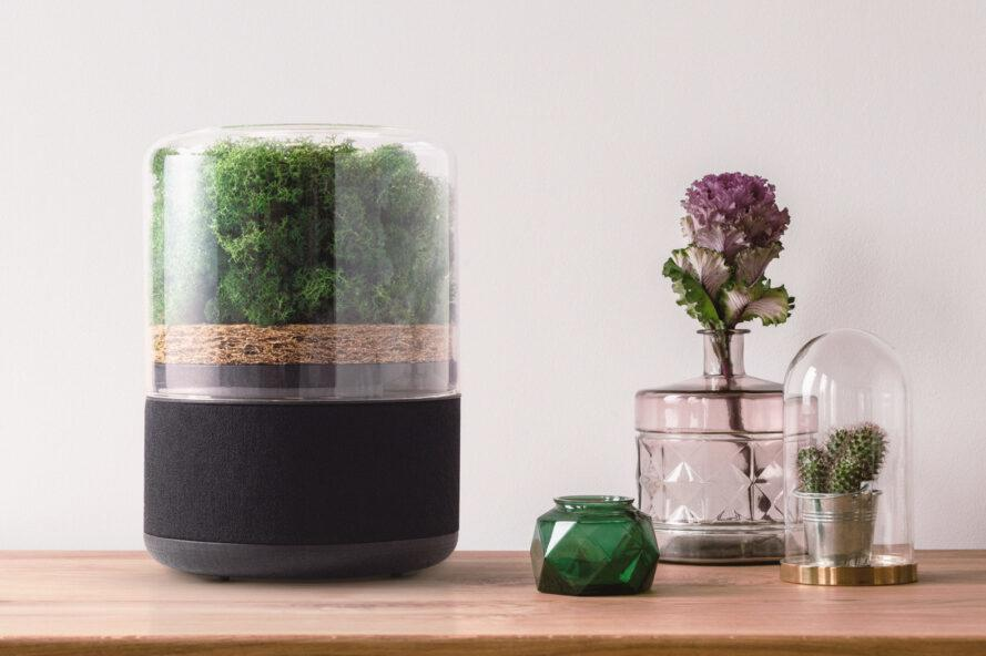 moss air purifying near glass vases