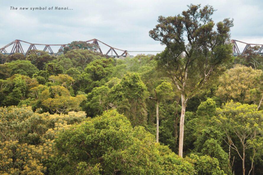 rendering of bridge near subtropical forest