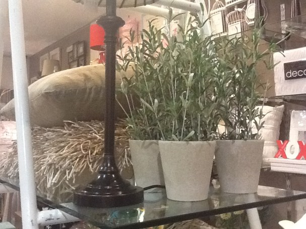 Rosemary potted plant $29.95