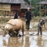 Bupati Purwakarta Dedi Mulyadi programkan jaminan asuransi lahan pertanian produktif