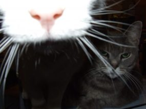 Author Page white cat nose in camera lens grey tabby in background